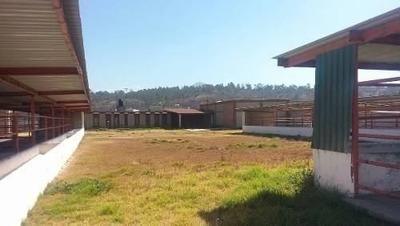 Rancho Ganadero En Venta Temamatla Edo Mex